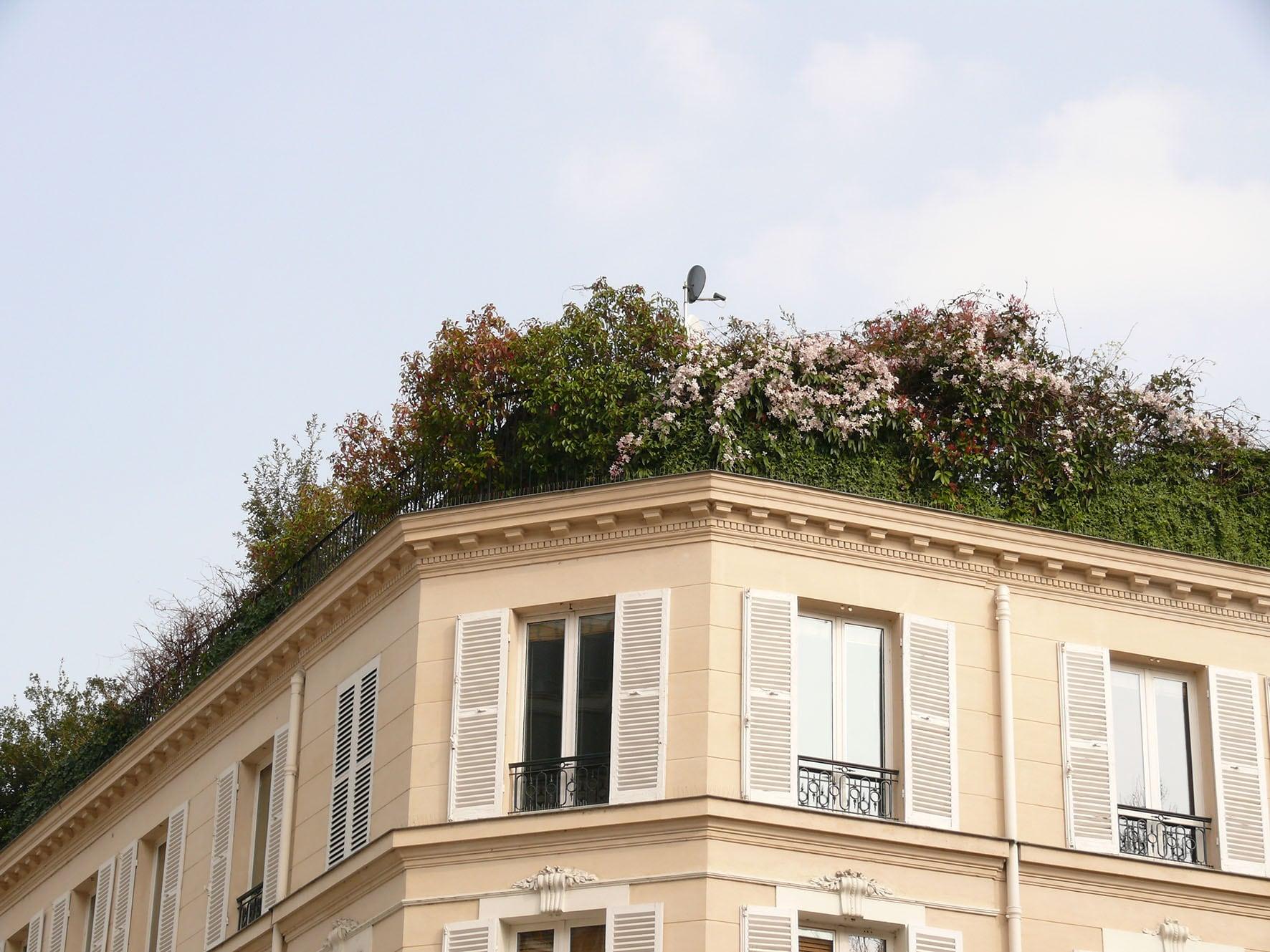 Toit terrasse fleuri